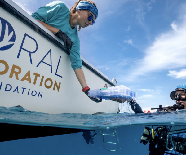 Coral Restoration Foundation Launches a New Tool for the Coral Restoration.